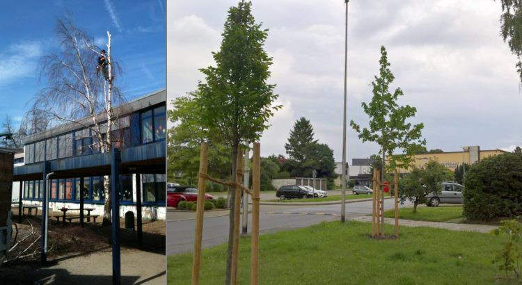 Eine schnell wachsende Birke führte zur Verschattung unserer Solaranlage in Haßlinghausen. Es wurde gefällt und neu gepflanzt.