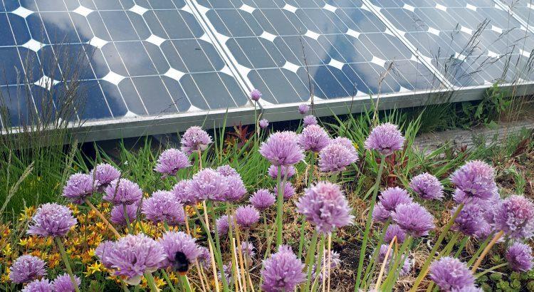 Naturverträgliche Ausbau der Photovoltaik / Freiflächenanlagen